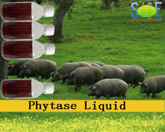 Phytase Animal Feed Liquid Enzymes In Animal Nutrition 20000u/mL Szym-PHY20L